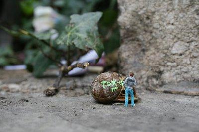 snail1-blog