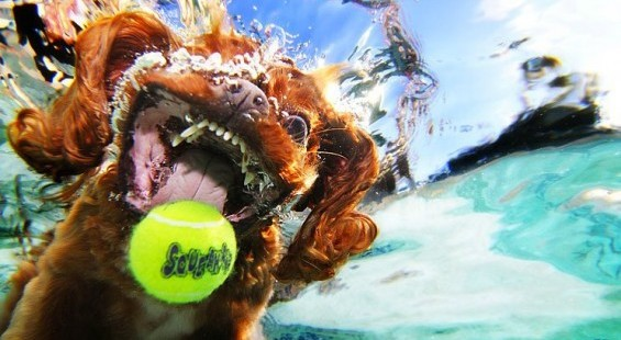 Underwater Dogs Photography By Seth Casteel