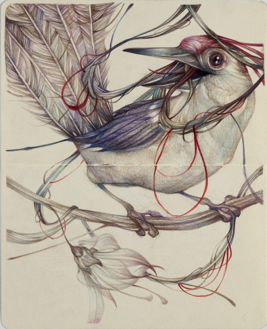 New wonderful illustrations by Marco Mazzoni