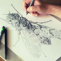little-wings-insect-drawings-alex-konahin-4