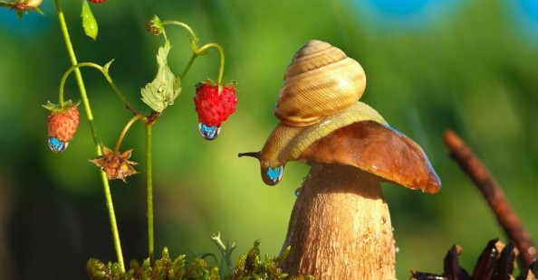 Snails fairy world photographs by Vyacheslav Mishchenko