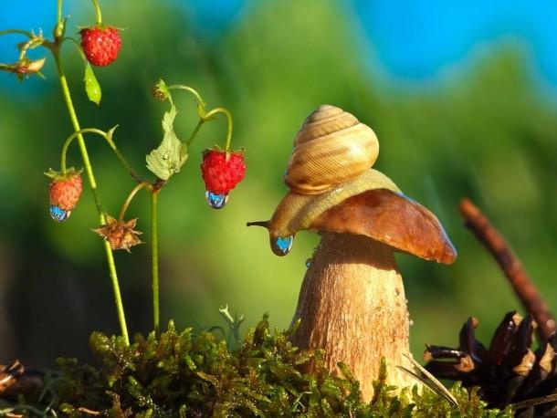 Snails fairy world photographs by Vyacheslav Mishchenko