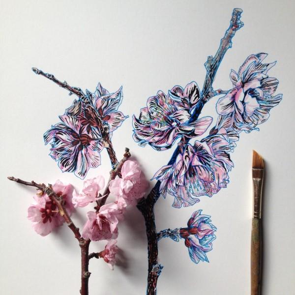 Flowers in Progress  A beautiful series of illustrations by Noel Badges Pugh (1)