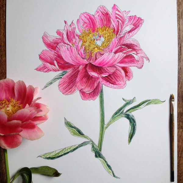 Flowers in Progress  A beautiful series of illustrations by Noel Badges Pugh (14)