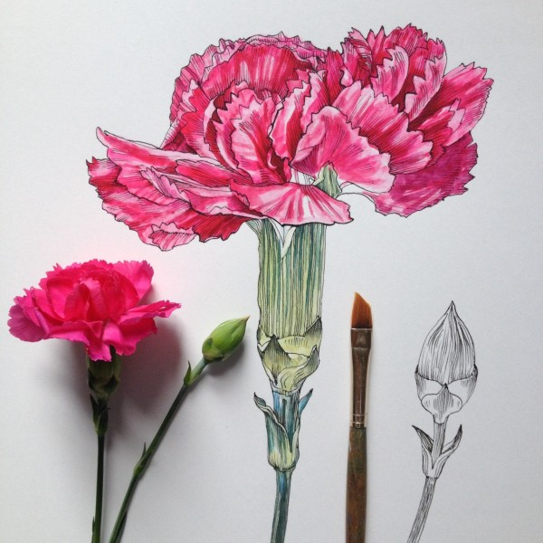Flowers in Progress  A beautiful series of illustrations by Noel Badges Pugh (19)