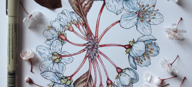 Flowers in Progress | A beautiful series of illustrations by Noel Badges Pugh