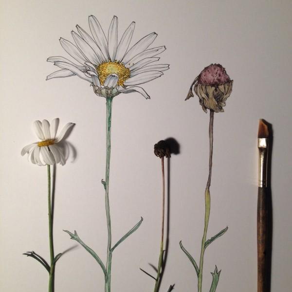 Flowers in Progress  A beautiful series of illustrations by Noel Badges Pugh (9)