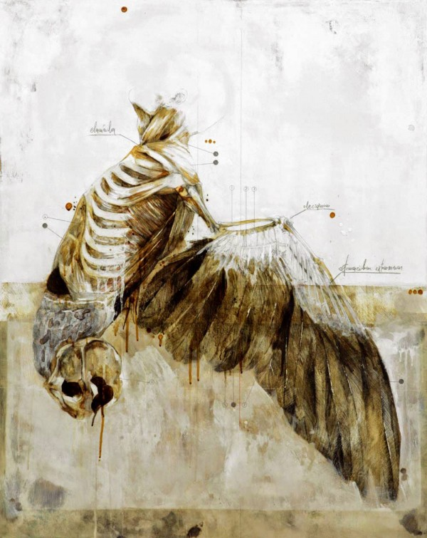 Anatomical illustrations by Nunzio Paci (2)