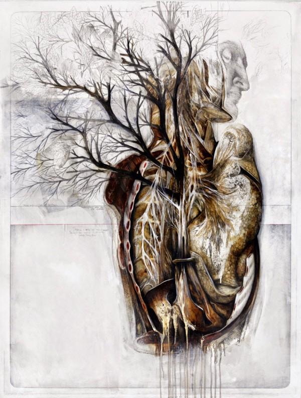 Anatomical illustrations by Nunzio Paci (3)