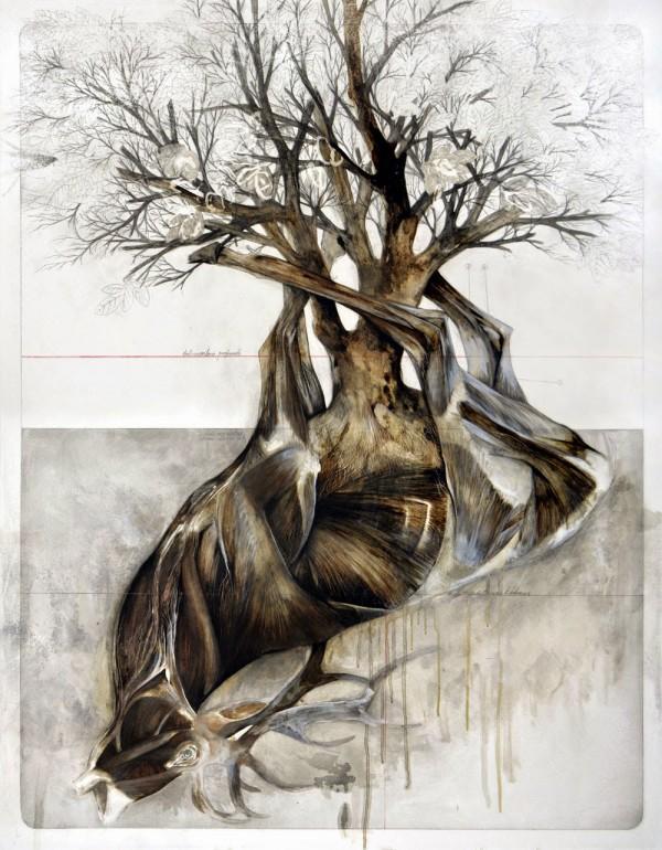 Anatomical illustrations by Nunzio Paci (4)